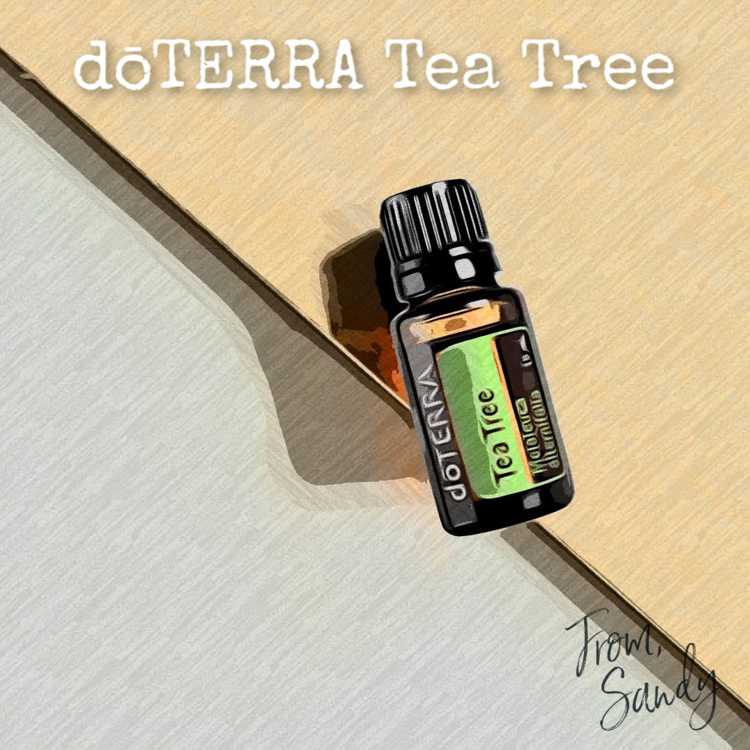 Learn more about Melaleuca (Tea Tree) Essential Oil, From Sandy